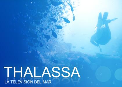 Diseño web corporativo Thalassa